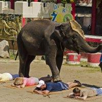Слон убийца :: Вячеслав Васильевич
