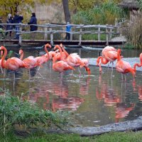 Розовые птахи :: Ольга