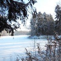 Зимний пейзаж :: Маргарита Батырева