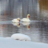 пара на реке :: linnud