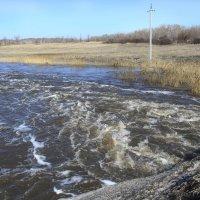 В Алтайский край пришла весна :: Andrey65