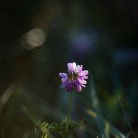 Полевые цветы :: Ivan teamen