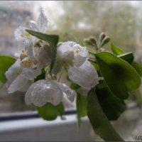 За окнами дождь, на душе –чистота. :: Людмила Богданова (Скачко)