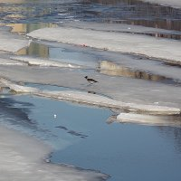 Мартовский лёд-5 :: Весна