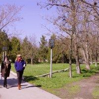 весна идет :: Наталия Сарана