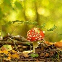 в осеннем лесу... #2 :: Андрей Вестмит