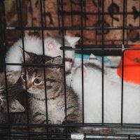 Маленькие комочки ищут дом :: Виктория Коломиец