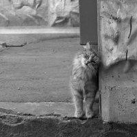 Одиночество :: Nina Grishina