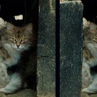 Фото с естественной рамкой и без :: Nina Grishina