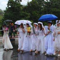 Невесты :: Юлия Жукова
