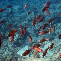 Стайка рыб исследует остатки затонувшего корабля :: Lukum