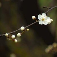 Весна пришла :: Александр Бахмутов