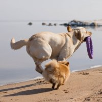 Собаки на пяже :: Kseniya Wolf