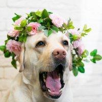 Цветочная собака :: Kseniya Wolf