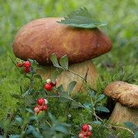 Осенью в лесу :: И.В.К. ))