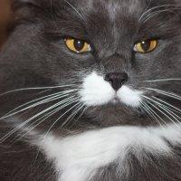 Суровый кот :: Алексей Моргачёв