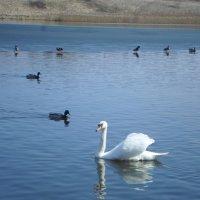 Озеро с птицами :: BoxerMak Mak