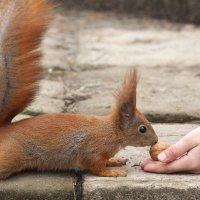 А орех вкусный? :: Павел