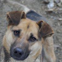 Собака-наблюдака :: A. SMIRNOV