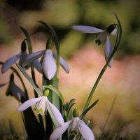 Весна :: Татьяна Ивановна