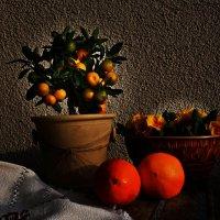Оранжевый.... :: Galina Dzubina