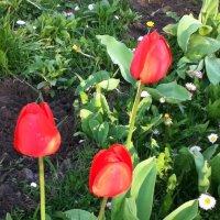 В нашем саду :: Анастасия Tрушко