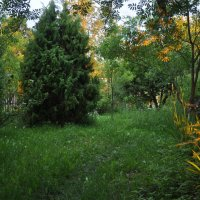 Утро в моём саду... :: Владимир Щеглов
