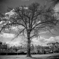 Одинокое дерево 2 :: Viacheslav