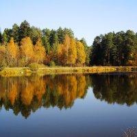 На лесном озере :: Андрей Снегерёв