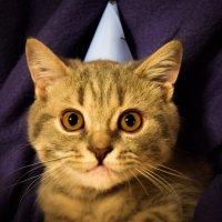 День Рождения :: Rina .