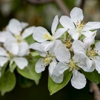 Мотивы весны :: Александр Грищенко