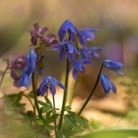 весна!! :: Александр Александр