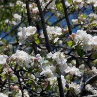Насладитесь весной ! :: СветЛана D