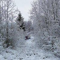 зимние узоры... :: александр дмитриев
