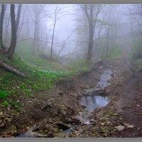 Однажды дождливой весной :: Игорь Овсянников