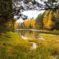 старица реки осенью... :: Сергей