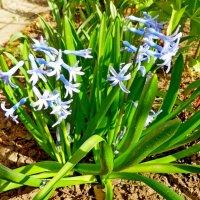запах весны :: Люша