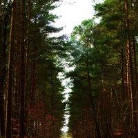 Лес. В начале пути :: Nina Yudicheva