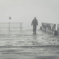 Утро туманное. :: Анатолий Щербак