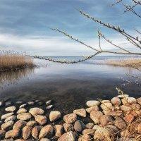 Апрель на заливе :: Владимир Самсонов