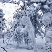 Снежная сказка :: Светлана Игнатьева