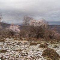Солнечная Адыгея в апреле :: Нина Сигаева