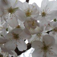 Весна :: Валентина Юшкова