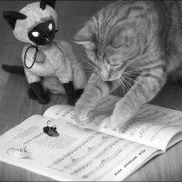 Песни мартовских котов :: galina bronnikova