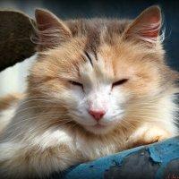 Я на солнышке лежу.. :: Андрей Заломленков