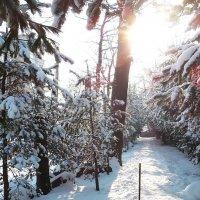 Снег в городе :: Маргарита Батырева
