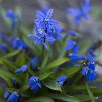 весна! :: Екатерина Исаченко
