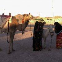 Фото бизнес по-египетски :: Lukum