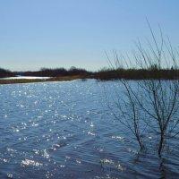 Озеро и речка :: Вера Андреева