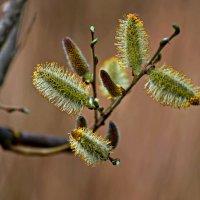 Весна ... :: Владимир Икомацких